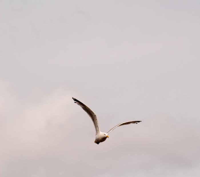 seagullstjohns-1-of-1