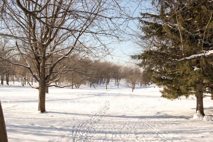 winterwonderland-1-of-1